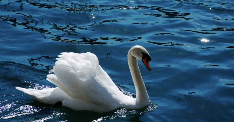 Ainsworth Gaming's Royal Swan: A Full Review